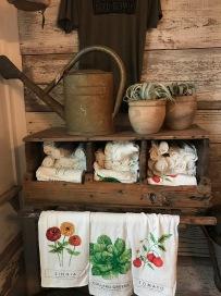 magnolia-seed-supply-garden