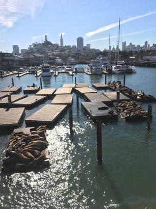 san-fran-pier-39-sea-lions
